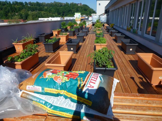Vrt na šolski strehi